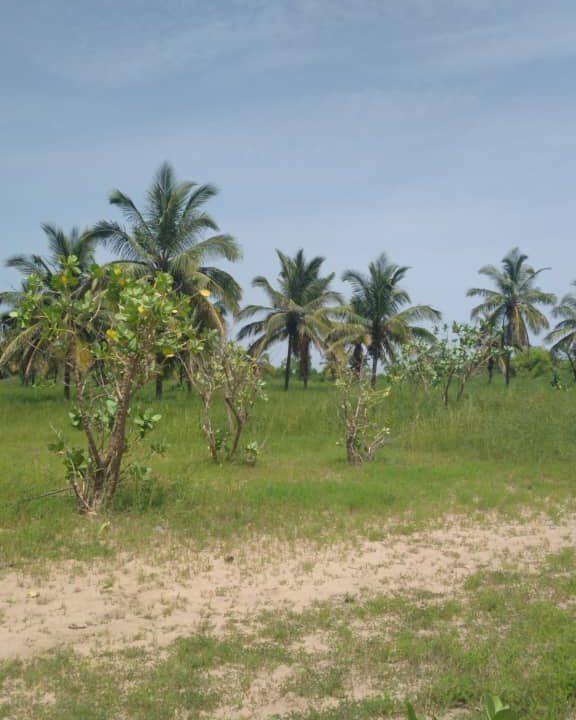 Terrains 300 mètre carré bord de mer pointe sarène1