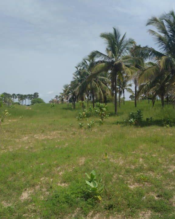 Terrains 300 mètre carré bord de mer pointe sarène3