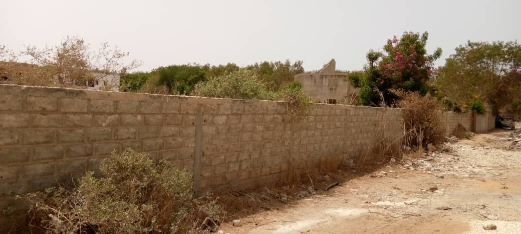 terrain 600 m2 à saly 3JPG